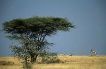 Hoteles en Tanzania