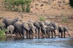 Río Perdido: Botswana, Delta del Okavango y Cataratas Victoria oferta hotel en Destinia.com