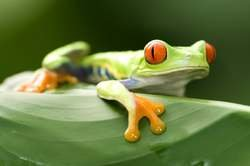 Naturaleza exótica de Costa Rica en 4x4 oferta hotel en Destinia.com