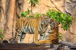 India Exótica y Parque Nacional Ranthambore oferta hotel en Destinia.com