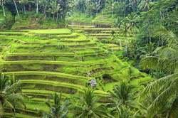 Bali: Circuito para Novios oferta hotel en Destinia.com