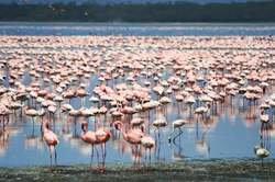 Kenia, Safari Kuvutia oferta hotel en Destinia.com