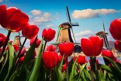 Holanda y Bélgica - Especial Singles oferta hotel en Destinia.com