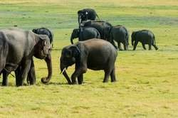 Ruta de las Especias: Abu Dhabi, India y Sri Lanka en Destinia por 2765.00€