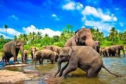 Descubre Sri Lanka con Excursiones Diarias oferta hotel en Destinia.com