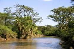 Tanzania: Safari Ngorongoro oferta hotel en Destinia.com