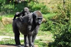 Gorilas en la Niebla oferta hotel en Destinia.com