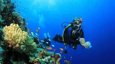 BUCEO EN CORN ISLAND, NICARAGUA      -                     Managua, Little Corn Island                     Mar Caribe, Isla Pequeña del Maíz