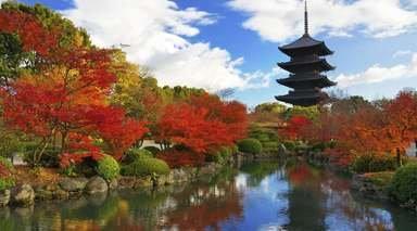 LUNA DE MIEL EN JAPÓN      -                     Parque Nacional de Fuji-Hakone-Izu, Nara, Tokio                     Kioto, Osaka, Hakone