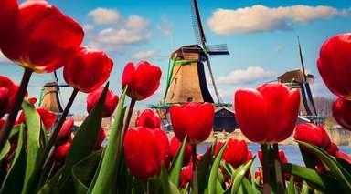 HOLANDA Y BÉLGICA - ESPECIAL SINGLES       -                     Barrio Rojo, Delft, Utrecht, Brujas, Flandes, Gante                     Grand Place, Lovaina, Malinas, Amsterdam, La Haya, Bruselas