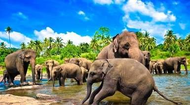 DESCUBRE SRI LANKA CON EXCURSIONES DIARIAS      -                     Nuwara Eliya, Colombo, Kandy, Dambulla, Galle                     Parque Nacional Yala, Polonnaruwa, Peradeniya, Sigiriya